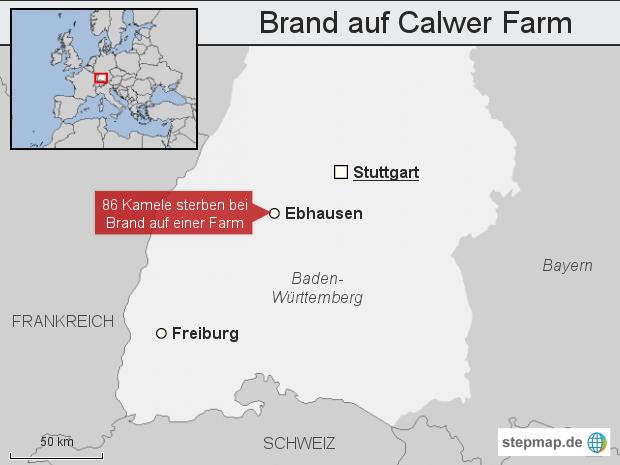 Brand auf Calwer Farm: 86 Kamele tot